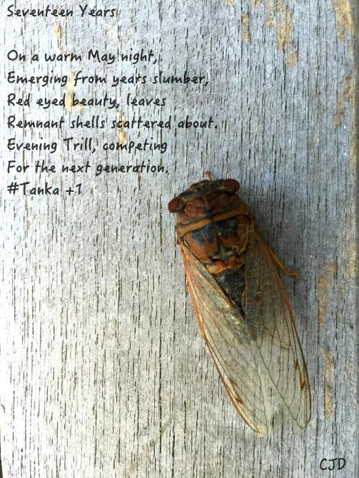 Cicada Tanka WM